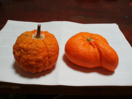 Mutated tangerine