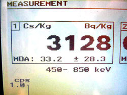3128 Bq/kg of cesium from Ibaraki mushroom2