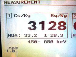 3128 Bq/kg of cesium from Ibaraki mushroom2