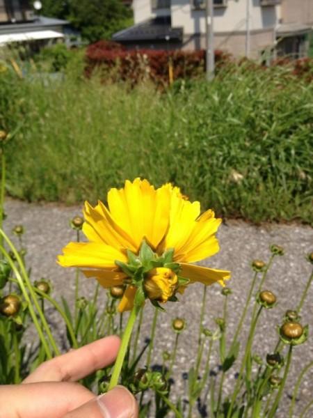 Double-headed flowers