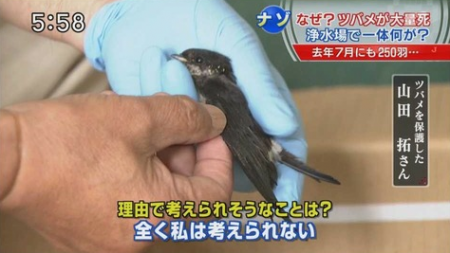 32 swallows found dead at the water purification plant in Nagano 6