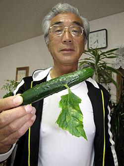 Mutated cucumber in Aomori