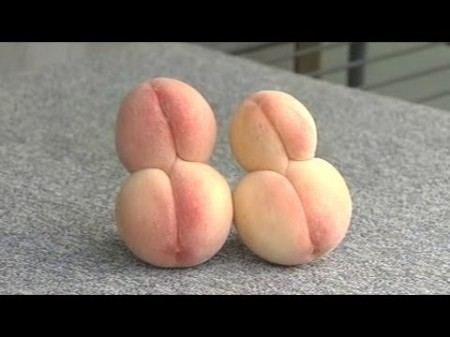 Conjoint peaches found in Hiroshima