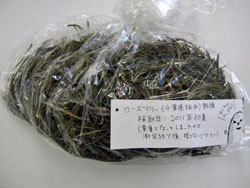 13,299 Bq/Kg from rosemary in Kashiwa