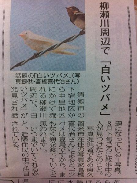 White swallow found in Tokyo too