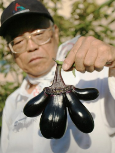 Mutated eggplant found in Osaka