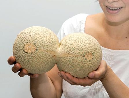 Conjoint melon found in Fukui