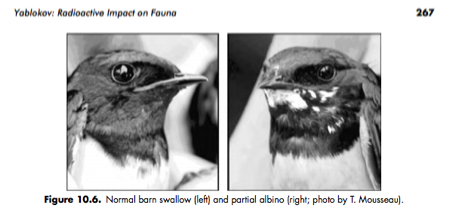 [Yablokov report about Chernobyl] Albino ratio of swallow jumped up in Ukraine