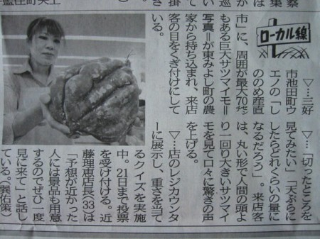 "Massive sweet potato found in Tokushima again, ""Bigger than human head"""
