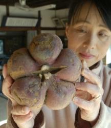 5 conjoint sweet potatoes found in Wakayama