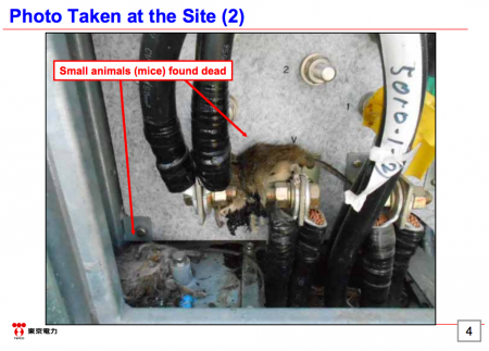 4 Tepco stopped coolant system of SFP reactor2 for finding TWO rats in power transformer