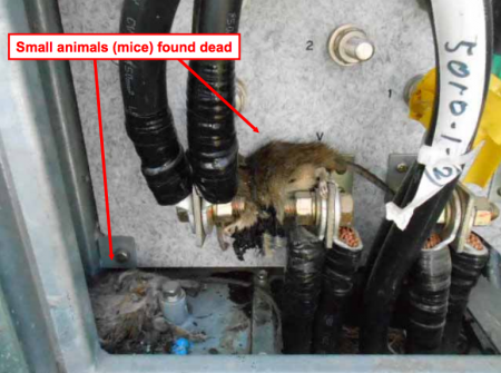 10 Tepco stopped coolant system of SFP reactor2 for finding TWO rats in power transformer