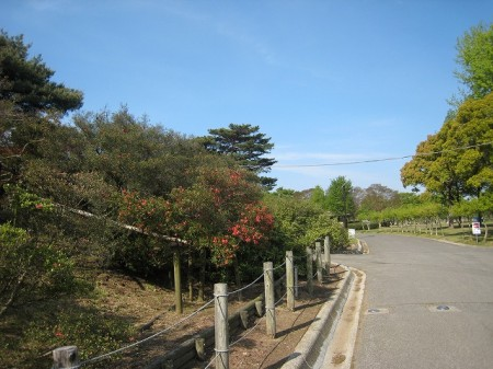 80% of the azaleas in a flower park of Gunma didn't have buds to bloom