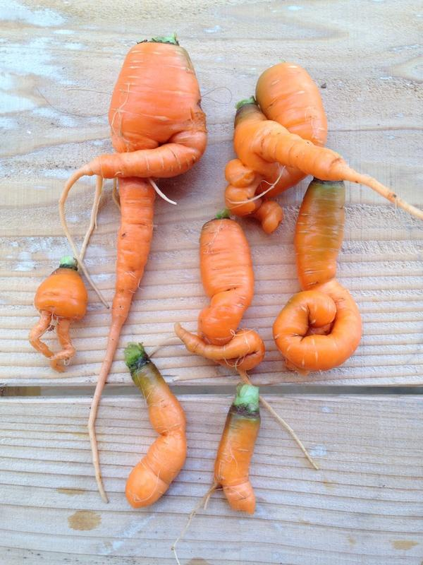 Japanese citizen Home grown carrots are TOO STRANGE this year
