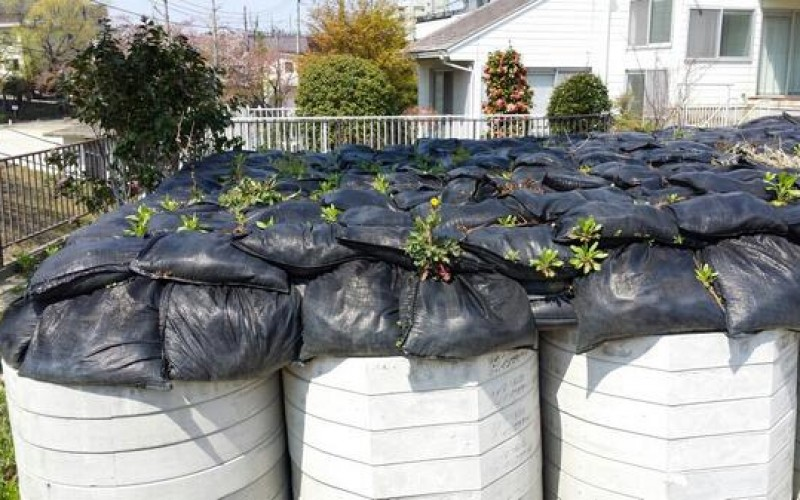 Plants starting to sprout from radioactive waste in Kohriyama city – Photo