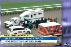 "ABC news ""10 horses dead this season in a racetrack of California, injuries and heart attack"""