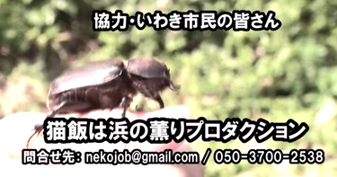 Headless Japanese rhinoceros beetle found in Japan - Photo, Video