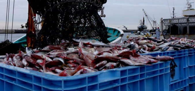 S. Korea returned 20 t of Japanese marine products for Cs-134/137 contamination / Not from Fukushima area
