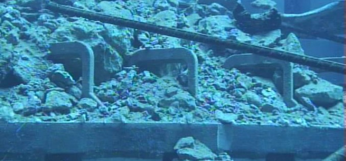 "Tepco ""found"" 8 more fuel assemblies under the fallen debris in Reactor 3 pool"