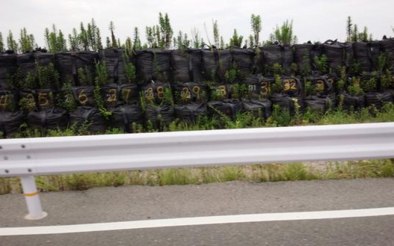 Tsunami embankment in Iwaki is still just sandbags / Plants are starting to grow up – Photo