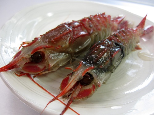 2 Strangely colored shrimp caught Shizuoka offshore - Photo