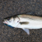 Cs-134/137 detected from 6 of 6 sea bass samples taken Ibaraki offshore