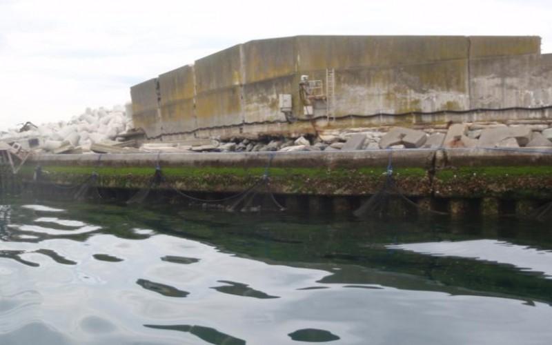 23,900 Bq/Kg of Cs-134/137 still measured from fish in Fukushima plant port