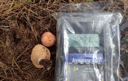 14,290 Bq/Kg of Cs-134/137 detected from mushroom in Iwaki city / Over double as last year