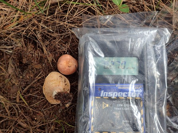 3 14,290 Bq:Kg of Cs-134:137 detected from mushroom in Iwaki city : Over double as last year