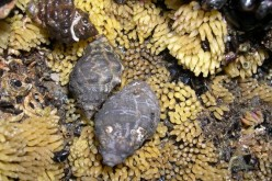 NIES reported the population and sorts of sea invertebrate significantly decreased around Fukushima plant