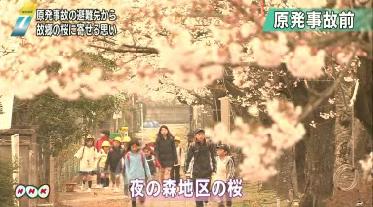 Good bye cherry blossom