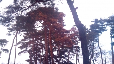 red forest Fukushima