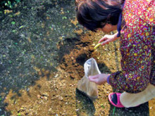 2567 Bq/kg from soil in Kashiwa 2
