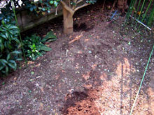 2567 Bq/kg from soil in Kashiwa