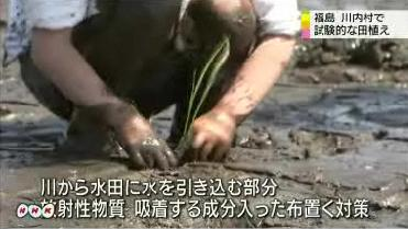 Rice planting in 30km area3