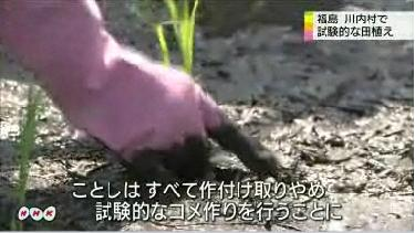 Rice planting in 30km area