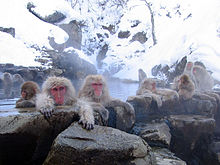 White cell count of Japanese macaque in Fukushima city significantly decreased