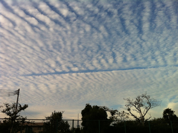 [Just in case] Cirrocumulus cloud covering the sky of Tokyo out of season