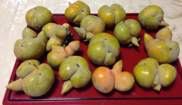 2 [Photos] Malformed persimmon mass-generated in Tokyo and Saitama