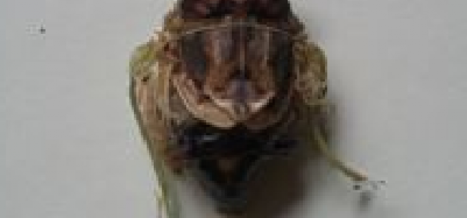 """Citizen in 300km area """"Malformation of cicada is getting worse and worse"""" – photos"""