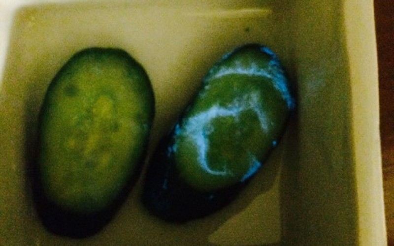 Cucumber found glowing in blue near Fukushima – Photos