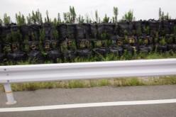 Tsunami embankment in Iwaki is still just sandbags / Plants are starting to grow up – Photo