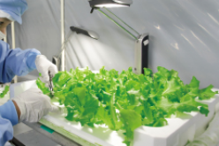 Panasonic to reuse Fukushima factory as vegetable factory